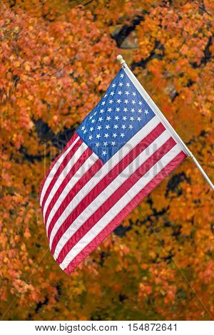 The US Flag is back by a tree sporting vivid autumn foliage on a street in the Midwest.