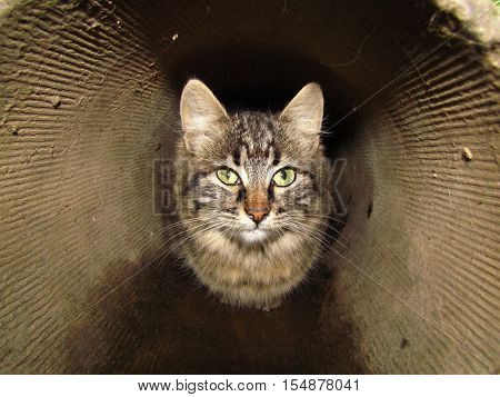 Grey cat sitting in the pipe and trembling with fear