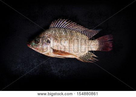 fresh tilapia fish on black wooden backgrund.