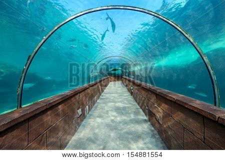 Looking through an aquarium tunnel with fish
