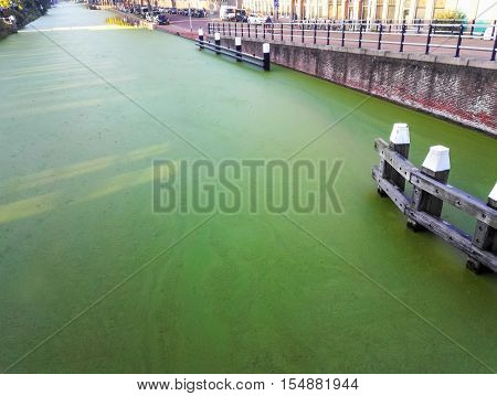 View of the canal with a layer of duckweed in Delft, The Netherlands