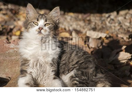 Young shaggy stray cat lying on ground in sunny day