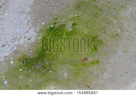 Green lichen on wet and moist concrete floor