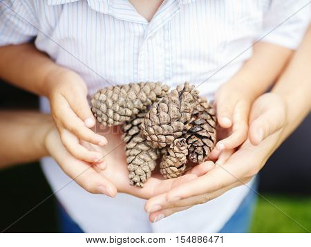 Closeup macro shot image of child with mother parent holding a bunch of pine cones toned with InstagramCloseup macro shot image of child with mother parent holding a bunch of pine cones toned with filters retro vintage style film effect selective focus sh