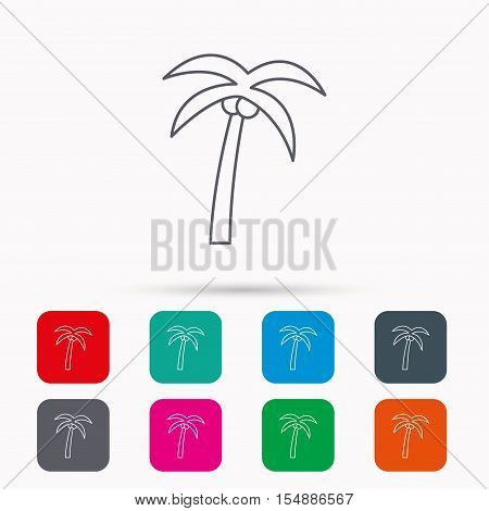 Palm tree with coconuts icon. Travel or vacation symbol. Nature environment sign. Linear icons in squares on white background. Flat web symbols. Vector