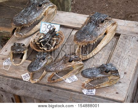 Gator Heads and Feet on display for sale in a market in Florida