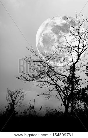 Silhouettes Of Dry Tree Against Night Sky And Bright Moon. Black And White Style.