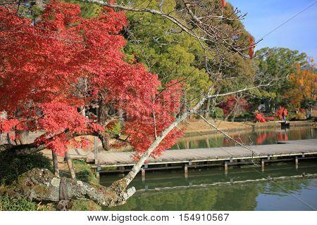 daikakuji at fall season kyoto at 2014