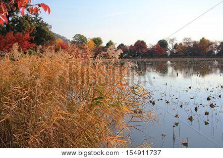 Daikaku-ji kyoto japan fall season at 2017