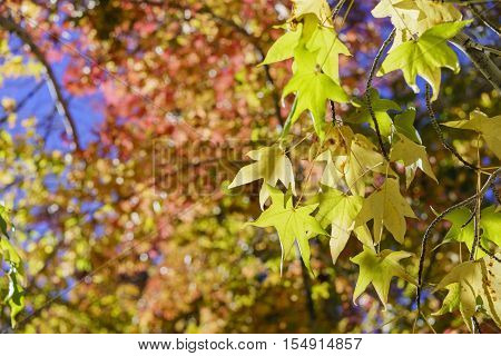 Fall Color Of Valyermo