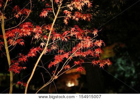 a fall season of kodaiji night  at 2014