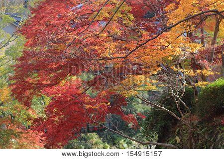 Fall. Autumn at Yasehieizanguchi japan  at 2014