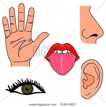 Vector Human Five Senses Set  Hand for Touch, Eye for Vision, Tongue for Taste, Nose for Smell, and Ear for Hearing Educational and Medical Material