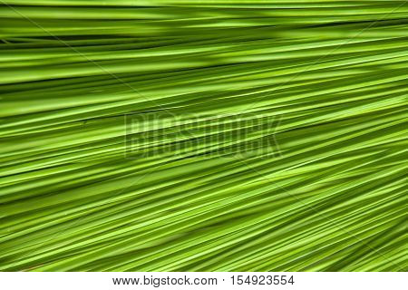 Abstract Green Nature Background of a leaf