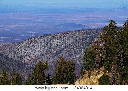 Pine Forest with the Mojave Desert beyond taken in the San Gabriel Mountains, CA
