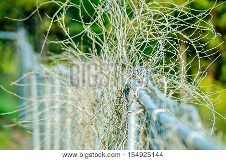 dry plant vines destroying a chainlink fence