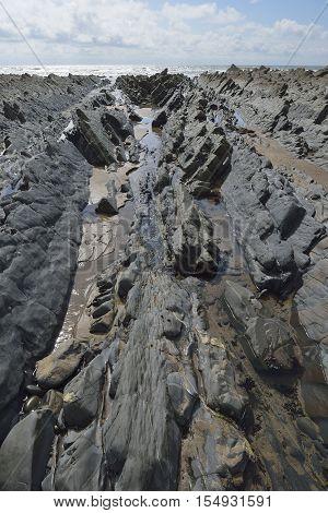 Sharp Dip in Folded Rock Strata lead out to Sea Welcombe Mouth Beach Hartland Peninsula North Devon Coast