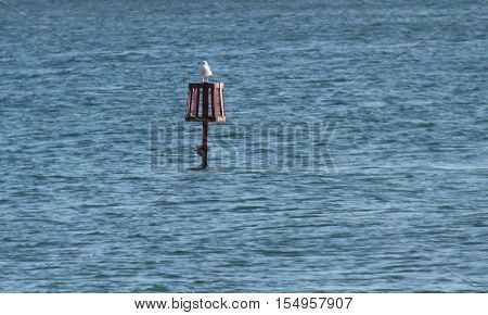 A Seagull Resting on an Obstruction Marker in the Ocean.