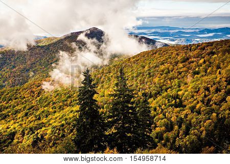 at the Great Smoky Mountains National Park