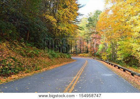 Fall leaves on colorful trees on the Blue Ridge Parkway, North Carolina.