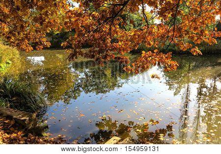 City Park in Hanau (close to Frankfurt am Main) in autumn tints, Germany