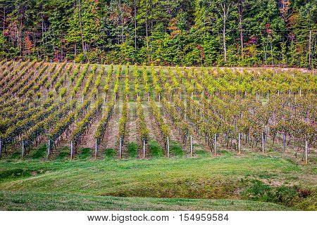 Horizontal shot of central american vineyard in the mountain foothills