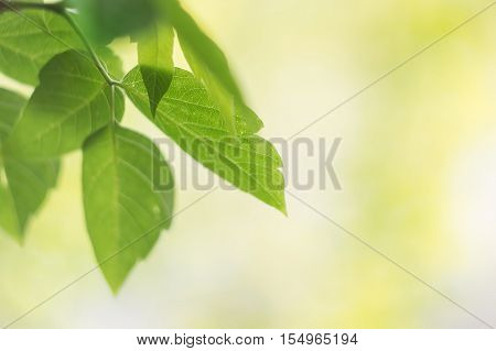 Green leaves on a yellow-green blurred background