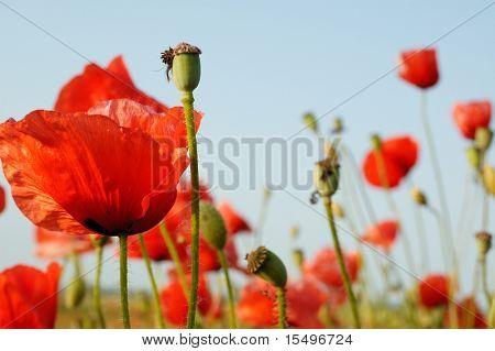 red flowerses on green field