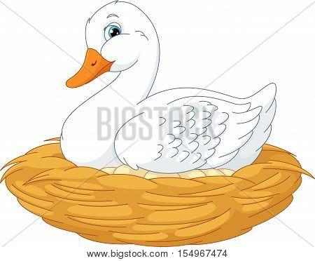Duck sitting on eggs in nest, EPS 8