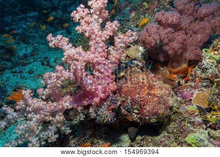 Gorgonian Red Soft Corals