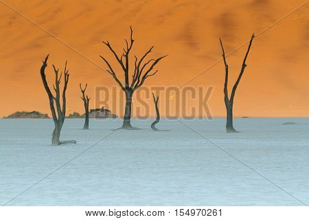 Petrified trees in the desert in Namibia on a salt pan