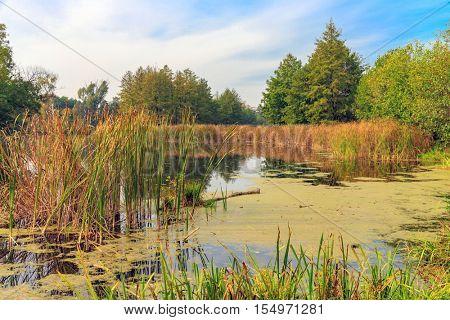 autumn landscape on old bog in forest