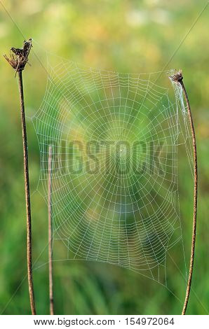spiderweb with a drop in the center of dry grass in the sun