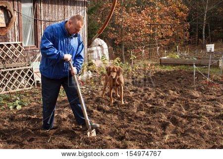 Agricultural work. Portrait of a man digging soil with shovel. Autumn yard work. A farmer preparing the ground for the winter.