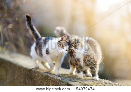 Two friendly cats hanging out together on spring day