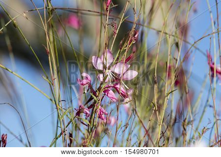flower in bloom in the garden in spring