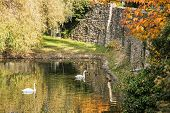 Moat with water swans and ducks in autumn time. Seasonal natural scene. Beauty in nature. Vibrant colors. poster