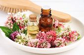Red clover extract and aroma essenial oil for natural cosmetic haircare treatment. poster