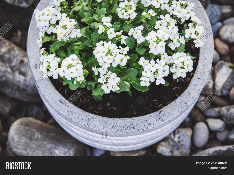 Stone Garden Image Photo Free Trial Bigstock