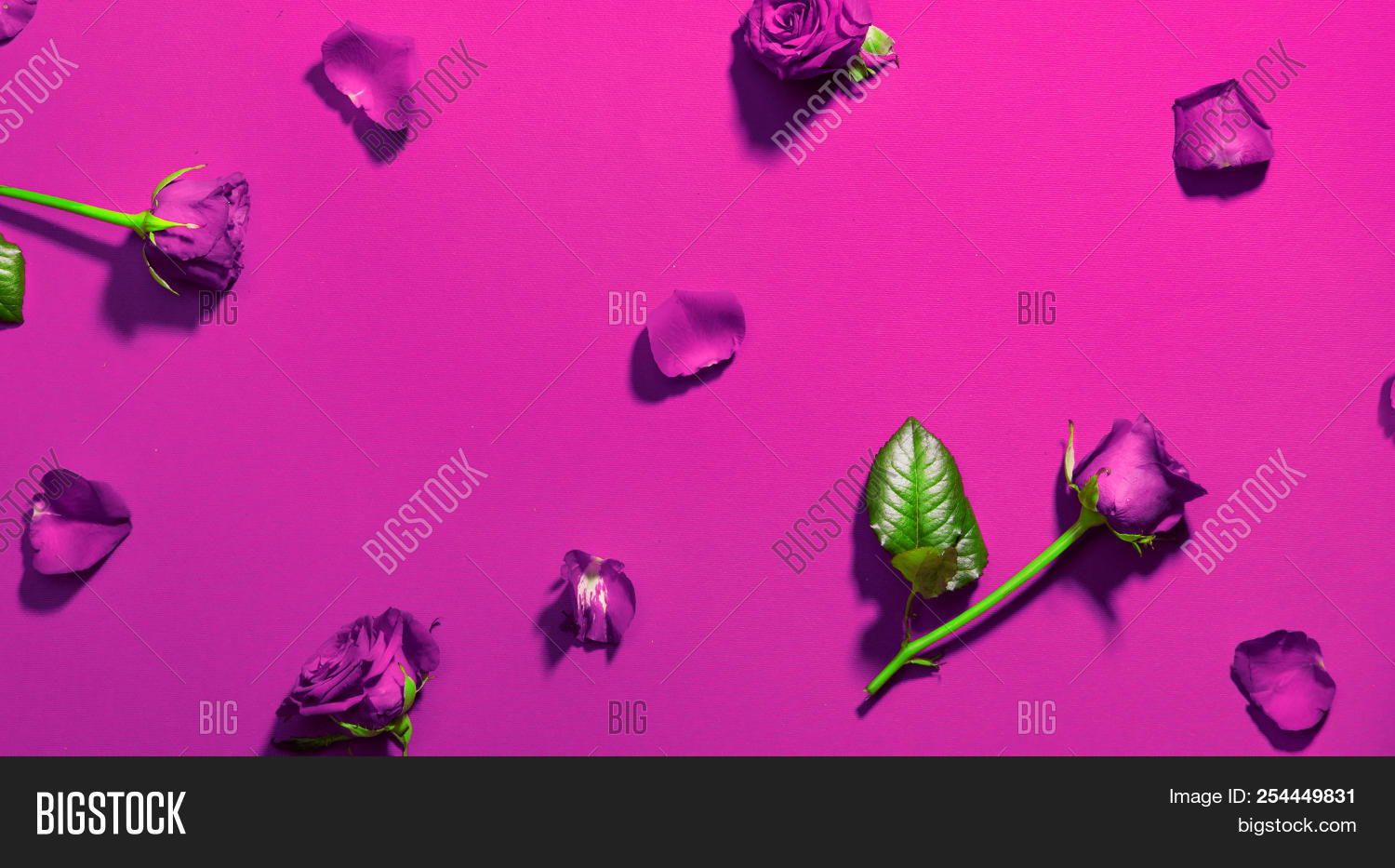Beautiful purple color image photo free trial bigstock beautiful purple color roses backdrop beauty holiday rose flowers with leaves and petals flatlay izmirmasajfo