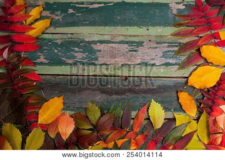 Autumn Maple Leaves Over Old Green Wooden Background With Copy Space