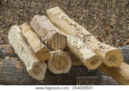 Pile Of Bare Logs With Bark Cut Off
