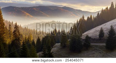 Sea Of Fog In Forested Valley. Gorgeous Panoramic Landscape In Autumn Mountains. Spruce Trees Lit By