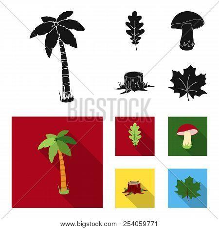 Oak Leaf, Mushroom, Stump, Maple Leaf.forest Set Collection Icons In Black, Flat Style Vector Symbol
