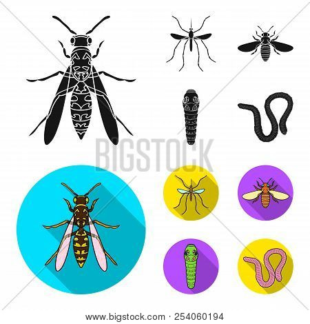 Worm, Centipede, Wasp, Bee, Hornet .insects Set Collection Icons In Black, Flat Style Vector Symbol