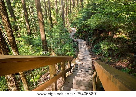 Forest Walkway Near Lynn Canyon In North Vancouver.