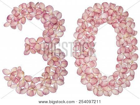 Arabic Numeral 30, Thirty, From Flowers Of Hydrangea, Isolated On White Background