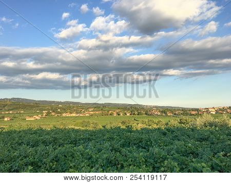 Countryside Landscape, Vineyards In Valpolicella, Province Of Verona, Northern Italy, Italy. Landsca