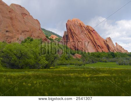 Red Rocks In Bloom