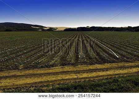 Farm Land/agricultural Land Outside Of Guadalupe, California